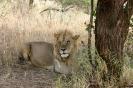 Serengeti_14