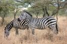 Serengeti_19