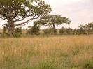Serengeti_2